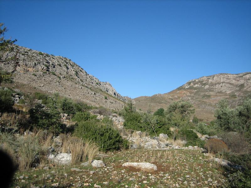 Colchicum balansae (Limestone hillside just outside of Bozburun)