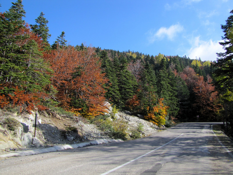 road and slope with Abies bornmuelleriana, Fagus orientalis and Populus tremula (Uludag)
