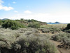 Habitat of Thymus capitatus, protected area, Fossil Dunes, ten km east of Datça, Datça Peninsula