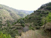 habitat of Cyclamen mirabile (Between Nazilli and Beydağ, before pass, 350m altitude, 15km N of Nazilli, Aydin Dağlari)