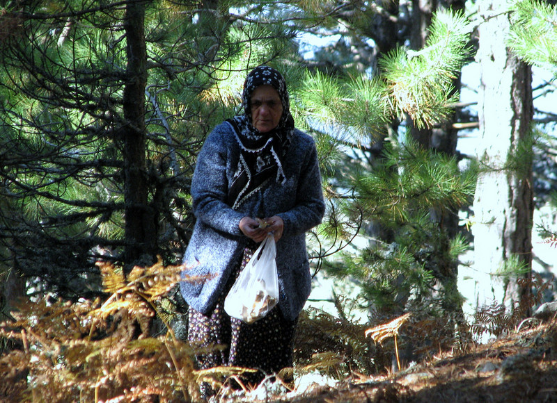 Turkisch woman collecting mushrooms (Between Bursa and Uladag, about 1000m altitude)
