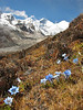 China,Tibet, Himalaya : Autumn flora around the Mount Everest, Tibet 2006