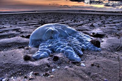 Stranded Jellyfish