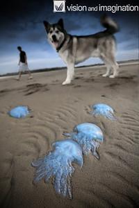 Blue invasion