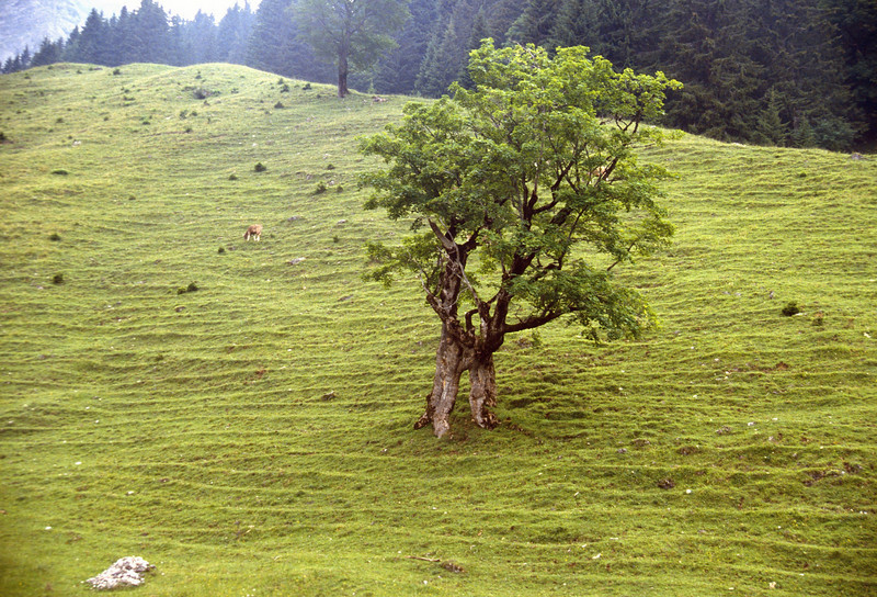stepformed meadow
