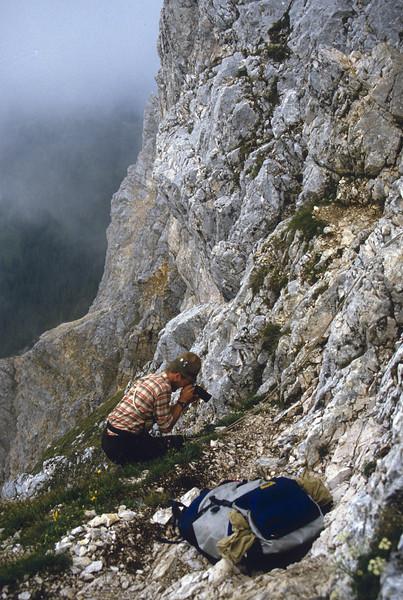 take photographs of Leontopodium alpina