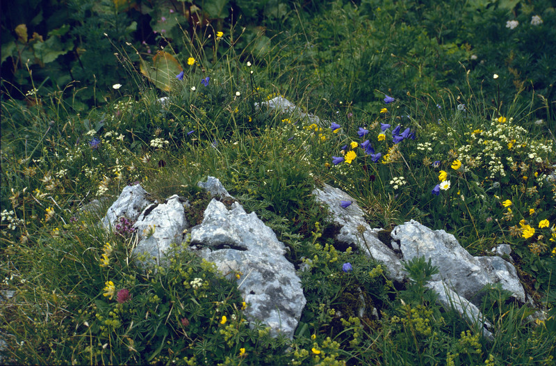 Nice biotope, or..... a Rockgarden