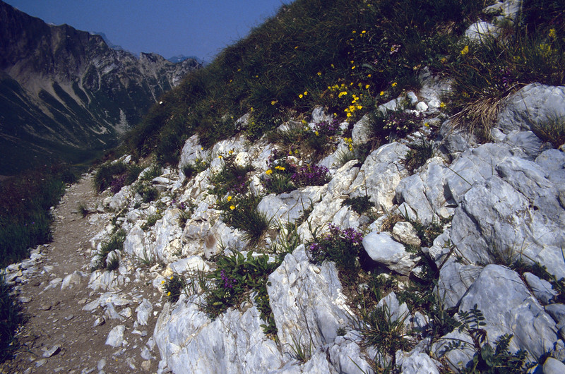 Northern Alps = lime stone rocks (Allgau and Tannheimer Alps, Germany/Austria)