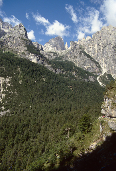 forest in the lower zones of the Brenta