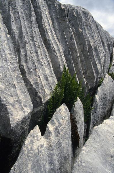 Erosion patterns and ferns (Dachstein, the Alps, Austria)