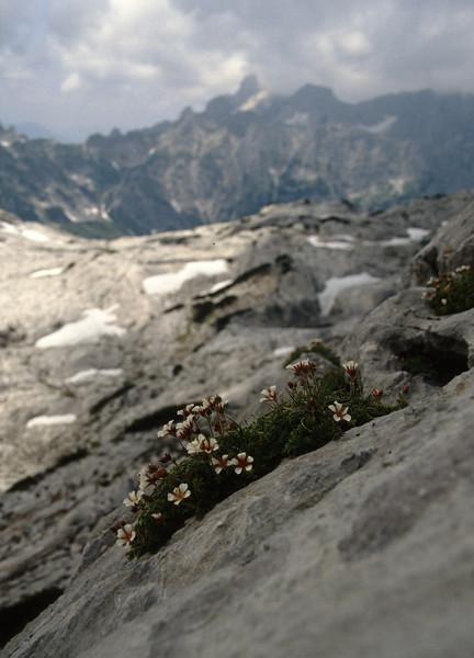 rock crevices habitat with Potentilla clusiana