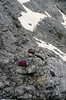 habitat of Silene acaulis (Hohe Dachstein, Dachstein, the Alps, Austria)