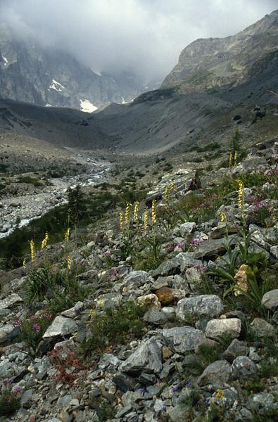 habitat with Digitalis grandiflora, Epilobium fleischeri, (Torrent de Glacier Noir 2000m)