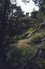 habitat with Lathyrus tuberosus