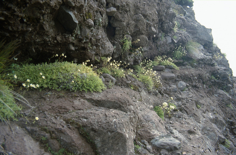 Habitat of Saxifraga aspera (Passo di Maniva ~2000m)