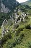 Limestone habitats (Passo di croce Dómini)