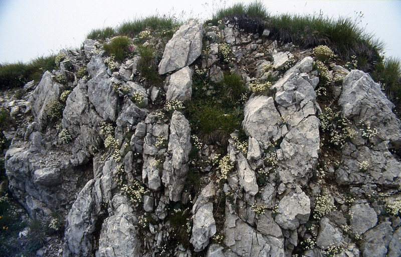 Habitat of Saxifraga caesia (summit Cima Tombea 1950m)