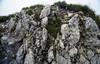 Habitat of Saxifraga caesia (summit Cima Tombea 1950m)