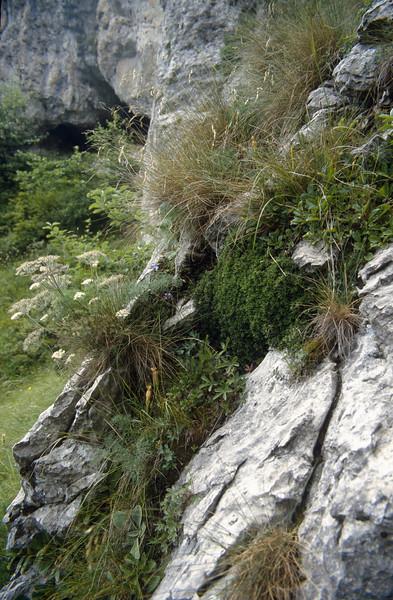 Habitat of Daphne petraea (Passo di croce Dómini)