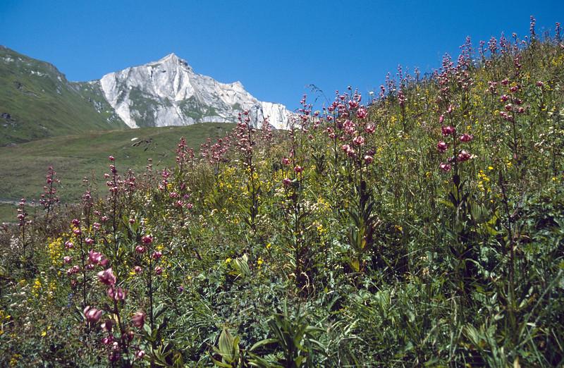 habitat of Lilium martagon, 20 July 2002 (Gran Bernard 2000m)