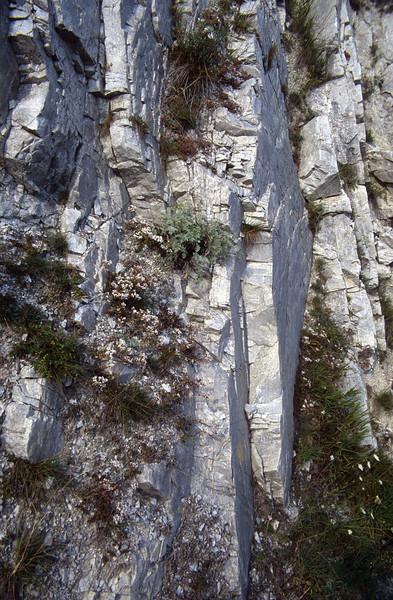 Rock habitat