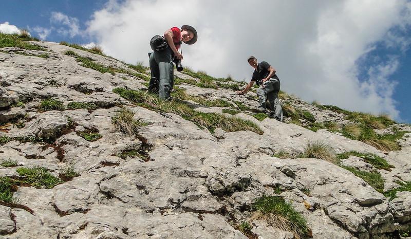 Rocks habitat