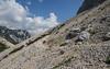 Linaria alpina and Allysum ovirense