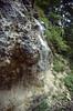 Wet habitat in limestone (NL: Tufsteen) (Triglav National Park, Julian Alps, Slovenia)