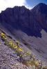 habitat of Papaver rheaticum ssp. kerneri