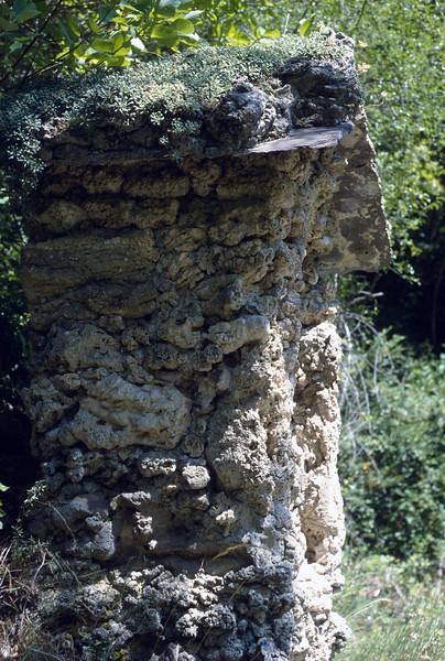 Saxifraga callosa ssp. callosa on the roof of the chapel (Maurioun, Val de Cairos, Roya Valley)