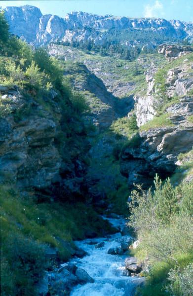 Biotoop Sax.diapensioides 1800 mtr MA Fr.