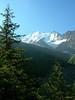Picea abies, with Glacier de Bionnassay, Mont Blanc area