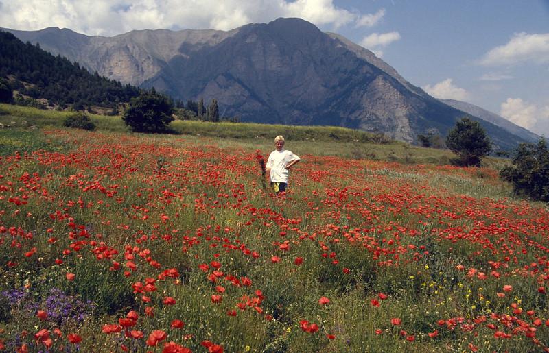Jeroen in a field of Papaver rhoeas