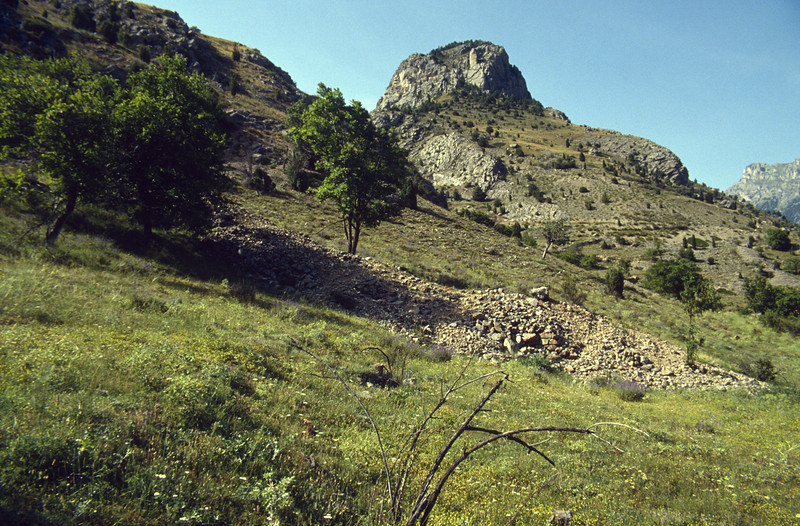 Juniperus spec. in dry habitats in the Queyras