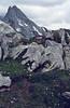 Lloydia serotina, Ofenpas 2291m