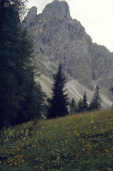 habitat of Arnica montana and Aconitum lycoctonum spec.