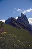 habitat of Trollius europeus (Geislerspitze, South Tirol)