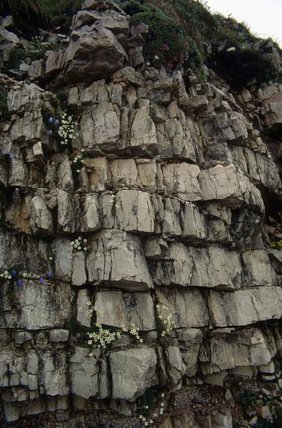 habitat of Saxifraga squarosa (Sextener Dolomites)