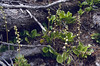 habitat of Pyrola rotundifolia,(NL: rondbladig wintergroen) (Swiss National Park, Graubunden)