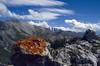Xanthoria elegans (lichen) (National Park, Graubunden