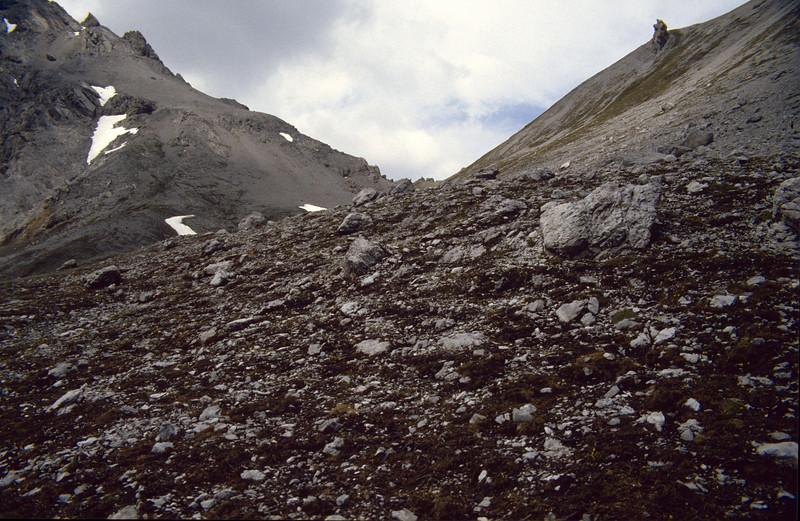 habitat of Saxifraga oppositifolia (National Park, Graubunden)