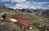 habitat of Silene acaulis (Munt la Schera 2580m)