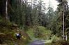 Selva forest, habitat of Linnaea borealis (National Park, Graubunden)