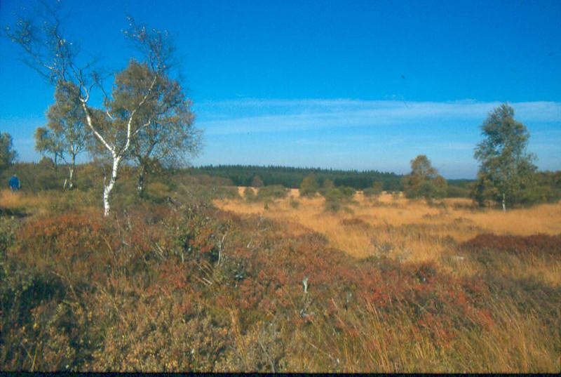 autumn,Hautes Fagnes