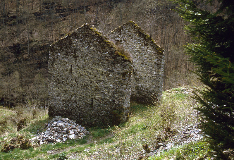 Habitat of ferns