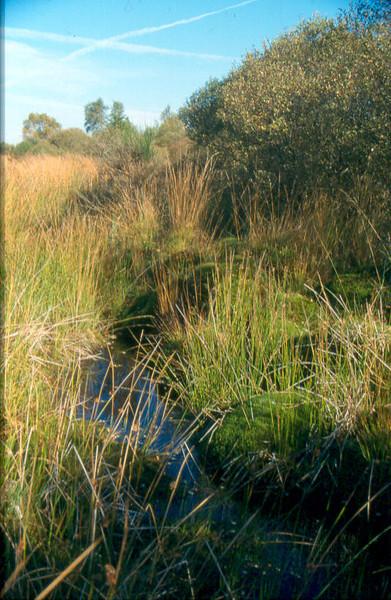 wet habitats
