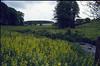 Hohnbach with Galium cruciata (Hohnbachtal, La Calamine,Belgium)