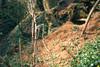 Badger' s burrow, (NL: dassenburcht) (Hohnbachtal, La Calamine,Belgium)