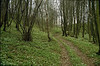 habitat of Anemone nemorosa (Hohnbachtal, La Calamine,Belgium)