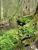 habitat near the Hohnbach of  Primula elatior (Hohnbachtal, La Calamine,Belgium)
